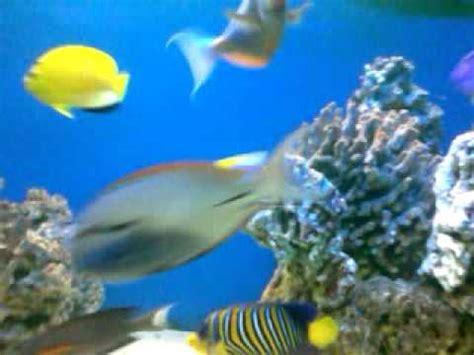 akuarium ikan hias laut