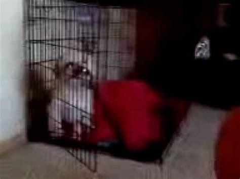 my dog poops in the house after being outside how i punish my dog for pooping in the living room funnydog tv