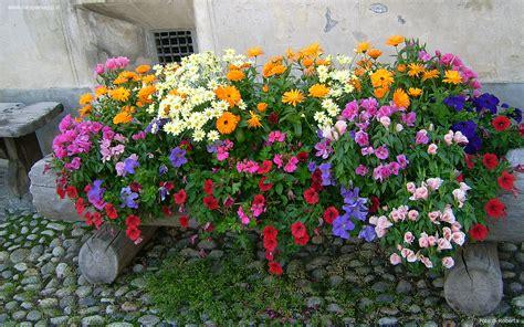 fiori per sfondi sfondi per desktop i fiori sfondo 024