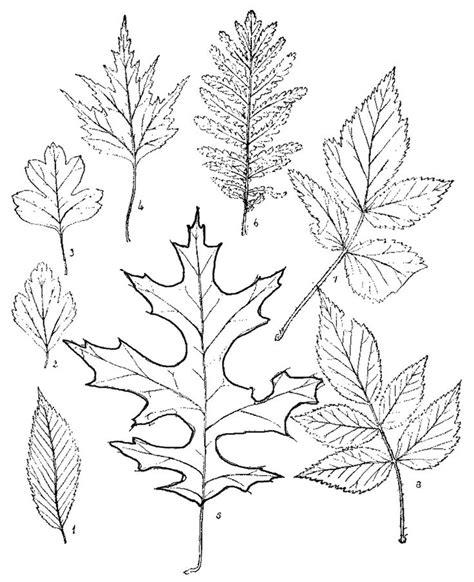 Wood Burning Templates Free by Wood Burning Craft Outlines Free Craft Patterns Botany