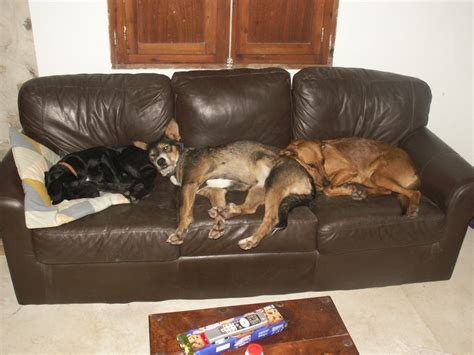 cheap dog sofas the best dog beds cheap dog beds for sale and more the