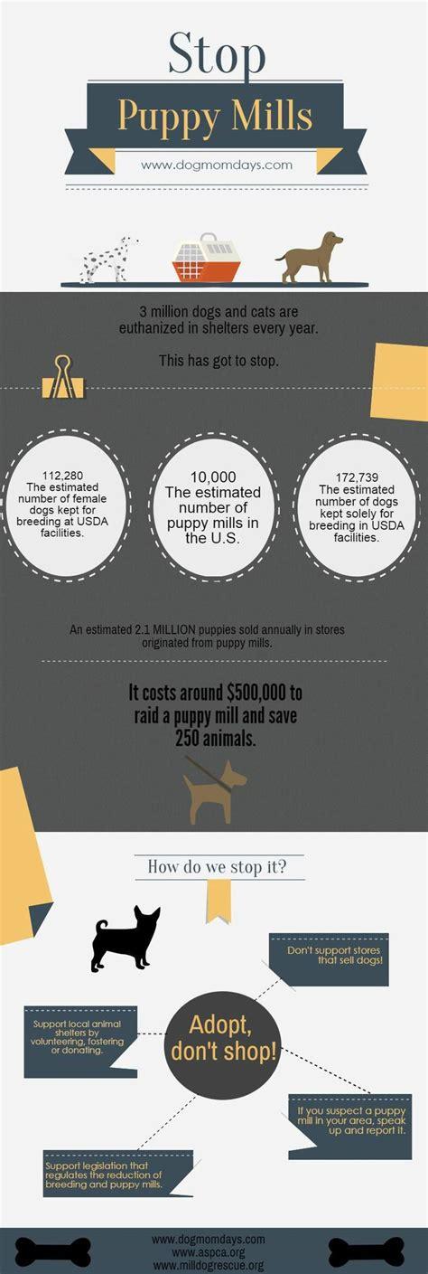puppy stop and adopt 25 b 228 sta puppy mill id 233 erna p 229 hundar i hundhem r 228 ddningshundar och