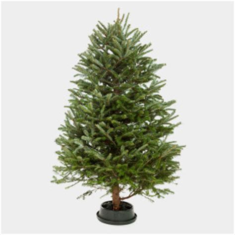 best price real christmas trees in plymouth trees real stockton recycling guide