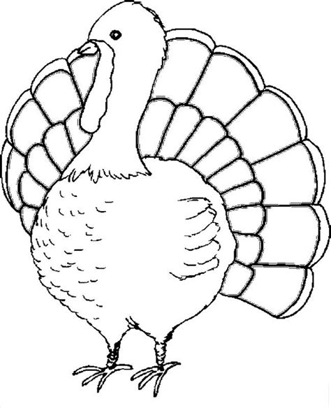 Free Printable Turkey Template by Free Printable Turkey Coloring Pages For