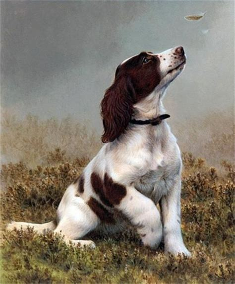 andrew herbert roofing 17 best images about dogs v on on