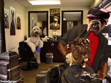 shop for dogs dogs at the barber shop pictures