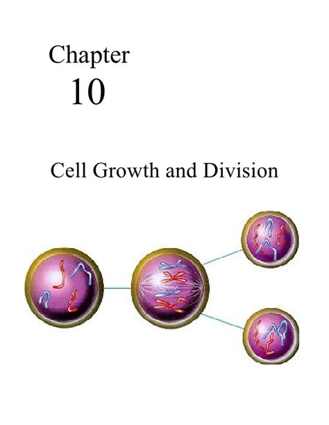 chapter 10 cell growth and division section review 10 1 biology chp10 cell growth and reproduction notes