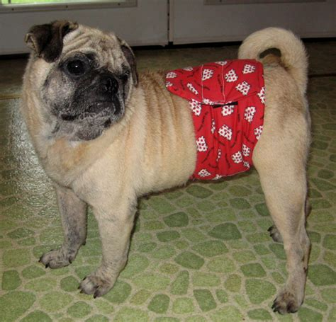 the pugs band shipping outside the united states there will be additional fees associated with