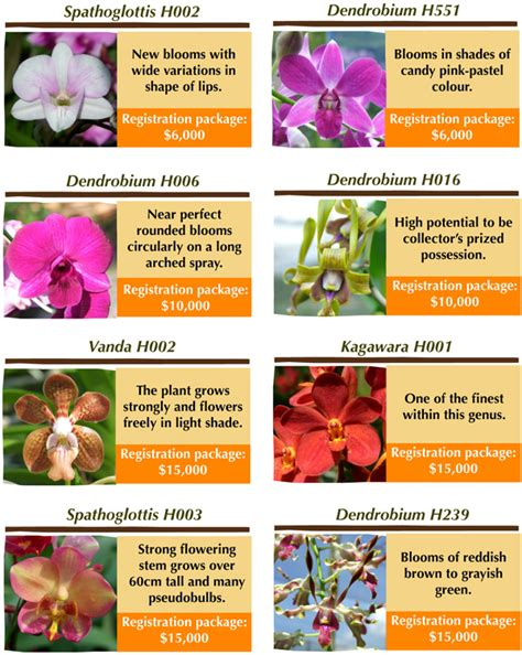 with name name your own orchid singapore general hospital