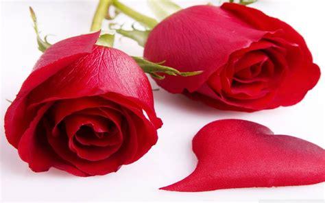 Flores Rojas | fonditos rosas rojas flores rosas plantas