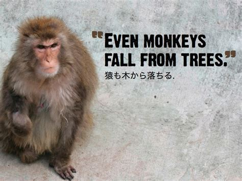new year monkey proverbs learning kanji 2 sayings for living simply