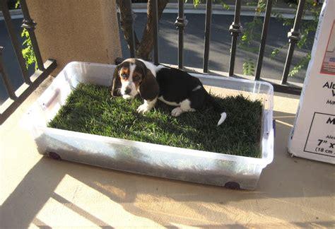 balcony dog bathroom storage bin dog potty petdiys com