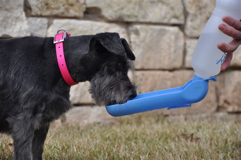 Water Dispenser For Dogs gulpy pet water dispenser portable water bowl