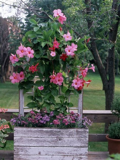 heat loving plants heat loving container garden plants gardens sun and decks