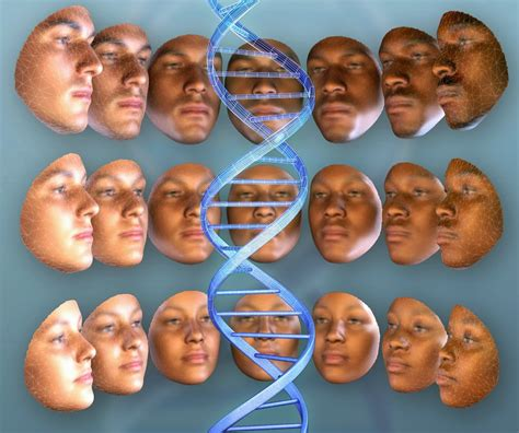 3d Genethics 1 3 d model links features and dna the archaeology