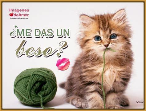 imagenes tiernas gatitos fotos hermosas de gatitos con frases tiernas gatitos tiernos