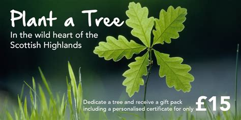 Trees For The Charity Thats Restoring The Caledonian Forest by Plant A Tree Trees For
