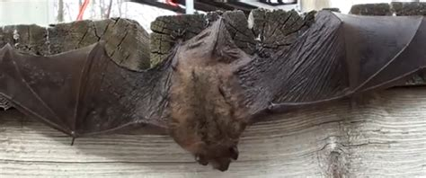 wild birds unlimited when do bats hibernate
