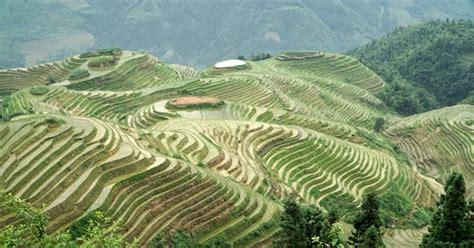coltivazione a terrazza le risaie a terrazza di longsheng la spina dorsale drago