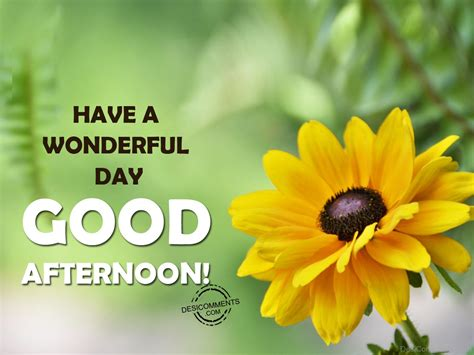 a day afternoon afternoon pictures images graphics for whatsapp page 29