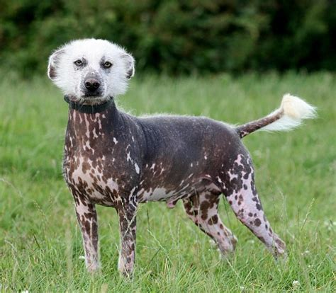 mexican puppy names e t find home rspca struggles to find new owner for britain s ugliest mutt daily
