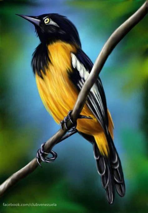 turpial ave nacional venezuela apexwallpapers com el turpial ave nacional nena venezolana pinterest