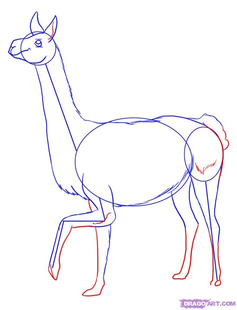how to make doodle drawing how to draw a llama step by step farm animals animals