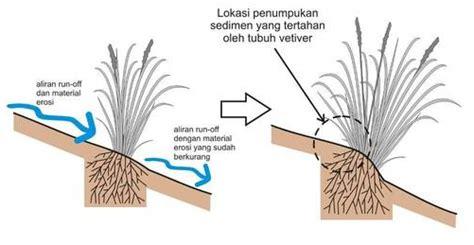 Rumput Tulip Panjang 1 2meter pengertian erosi dan metode konservasi tanah ilmu