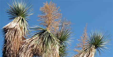 nomi piante da giardino piante mediterranee nomi alberi a foglie caduche piante