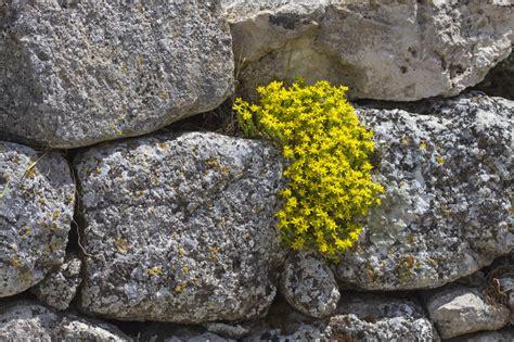 Natursteinmauer Mit Fenster by Natursteinmauer Ohne Fundament Bauen 187 Geht Das