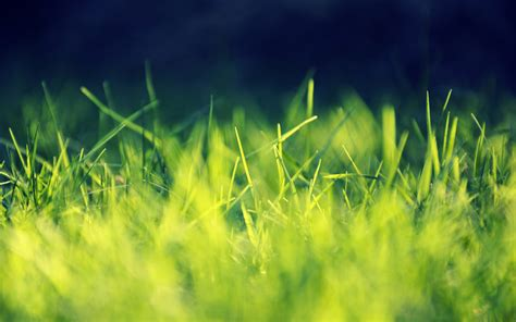 apple wallpaper grass 2560x1600 green grass close up desktop pc and mac wallpaper