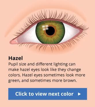 hazel eyes what determines hazel eye color all about