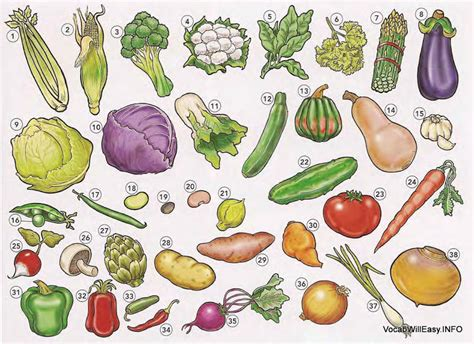 2 vegetables name vegetables dictionary for