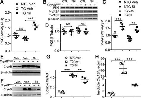protein kinase g protein kinase g positively regulates proteasome mediated