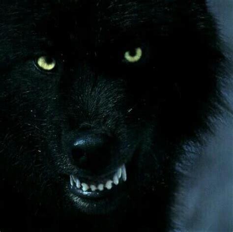 imagenes en negro el lobo negro huargonegro twitter