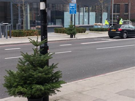 putney christmas tree collection times postively putney