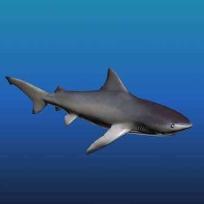 Tlf 45 Shark shark fish 3d model