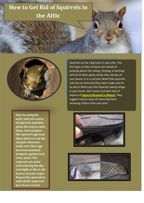 how to get rid of squirrels in the backyard how to get rid of squirrels in the attic