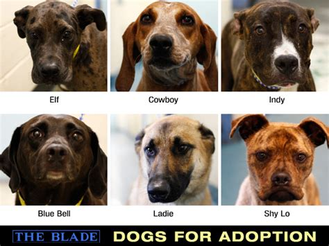 lucas county warden lucas county dogs for adoption 7 10 the blade