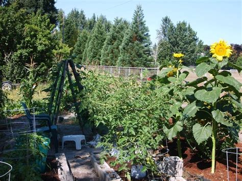 Garden Garden Garden My Vegetable Garden Gardening Relaxes Me
