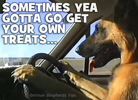 sometimes ya gotta go there on pinterest mood swings health 1000 ideas about funny dog gif on pinterest funny dogs