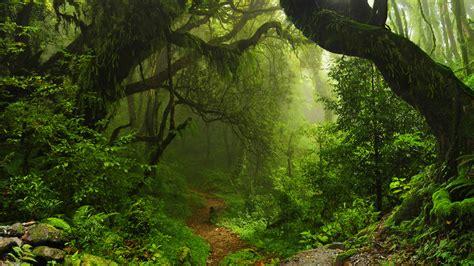 la selva de sara las 10 selvas m 225 s hermosas del mundo autobild es