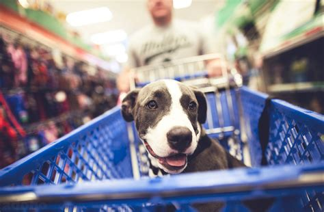 stores that allow dogs list of friendly stores in and around greater