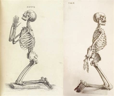 skeleton praying tab xxxvi osteographia 1733 and