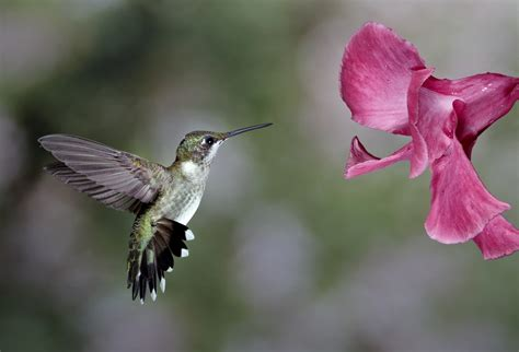 canon camera lowcountry hummingbirds high speed