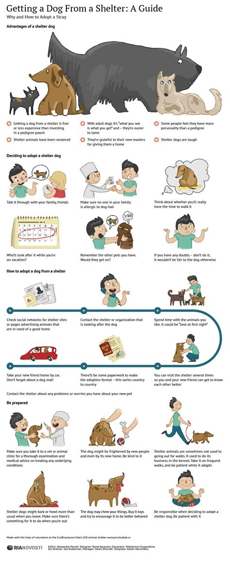 how to an adopted why and how to adopt a shelter infographic infographicspedia