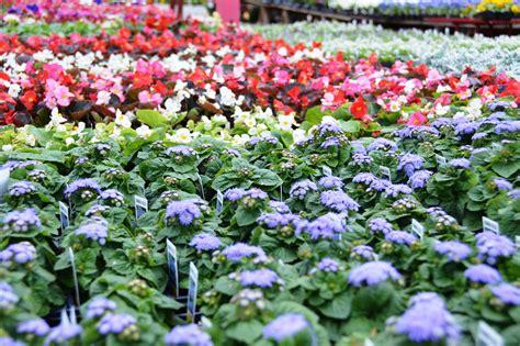 Garden Oakland by Photo Gallery Columbus Garden Center Oakland Nursery
