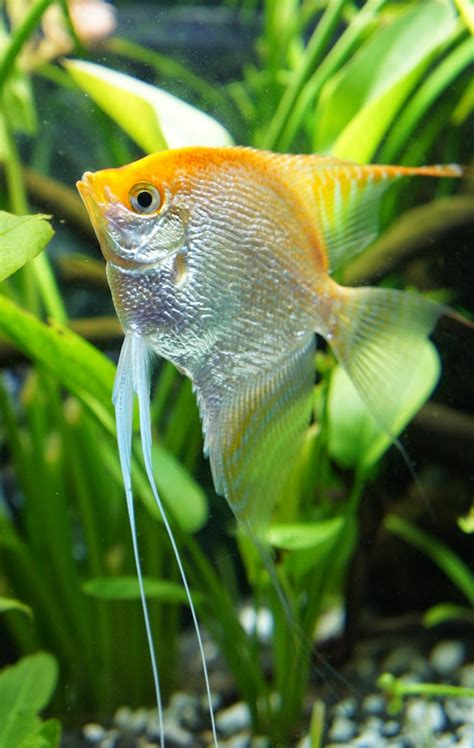 freshwater fish blok888 top 10 most beautiful freshwater fish in the world 2