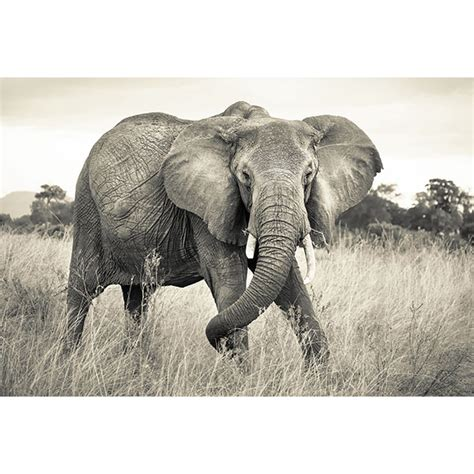 elephant wall mural elephant wall mural xxl4 529 by komar