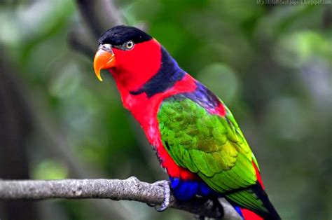 colorful birds wallpaper hd letest colorful parrot hd desktop wallpaper background